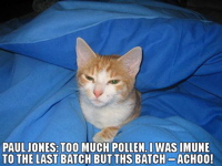 Allergy LOLcat