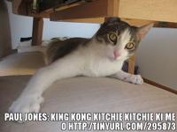 King Knog LOLcat